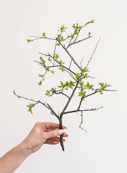 Groene tak plant in een hand houden