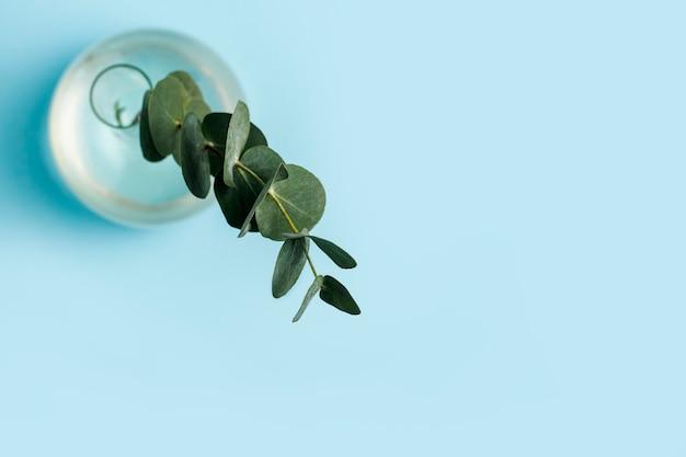 Groene tak van eucalyptus in een glazen vaas op een blauwe achtergrond.