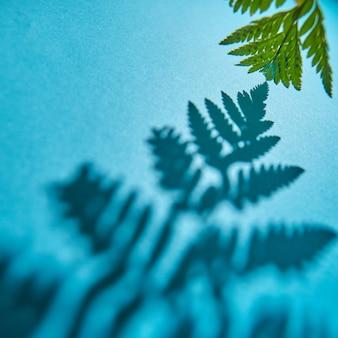Groene takje varen met schaduwpatroon op een blauwe muur met ruimte voor tekst. gebladerte lay-out