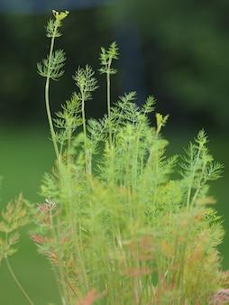 Groene takken van een struik die overdag groeien