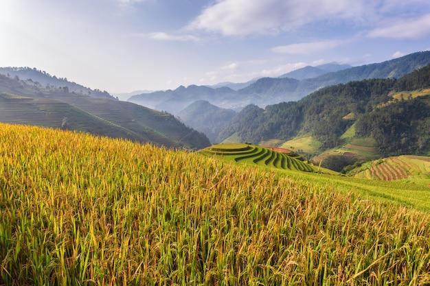 Groene terrasvormige rijstvelden in mu cang chai