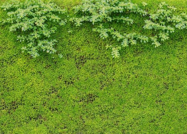 Groene textuur voor achtergronden