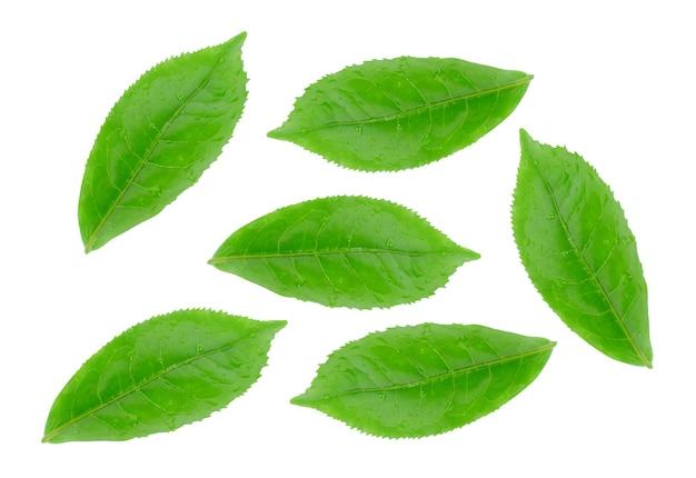 Groene thee blad collectie geïsoleerd op een witte achtergrond.
