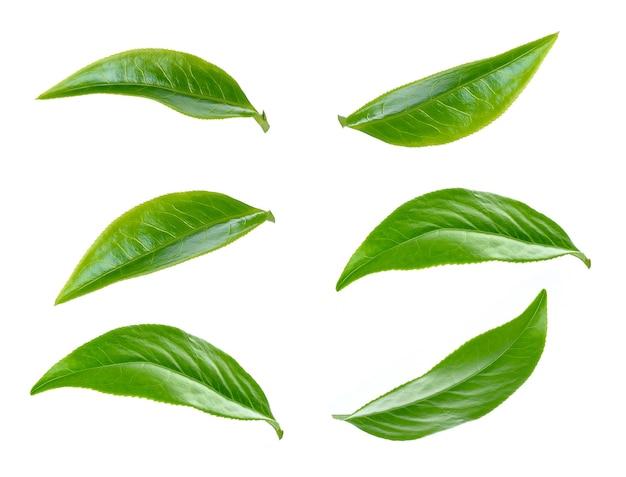 Groene thee blad collectie geïsoleerd op een witte achtergrond Premium Foto