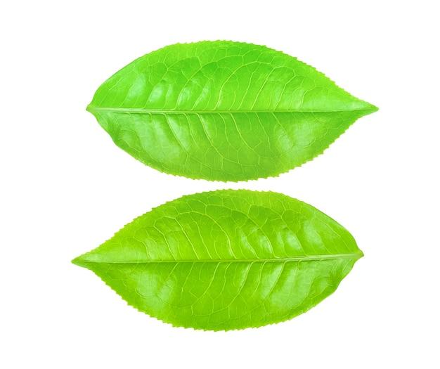 Groene thee blad geïsoleerd op een witte achtergrond.