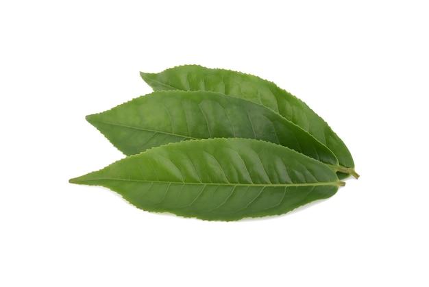 Groene thee blad geïsoleerd op een witte ondergrond