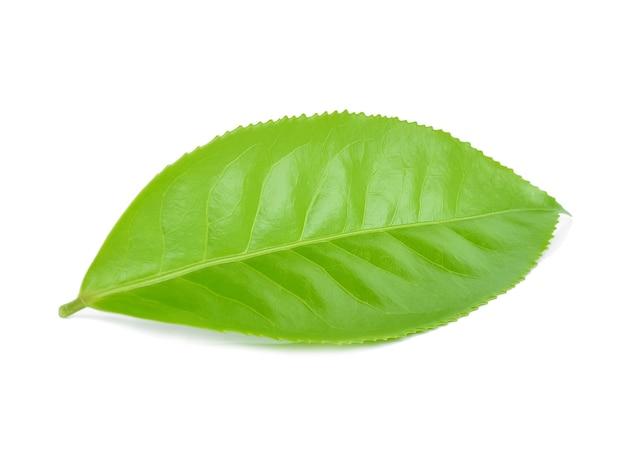 Groene thee blad geïsoleerd