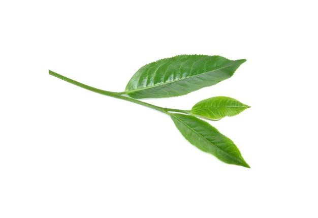 Groene thee bladeren geïsoleerd op witte achtergrond