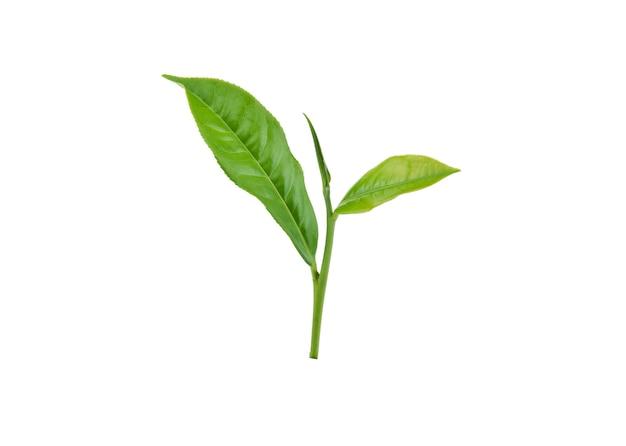 Groene theeblad geïsoleerd op wit