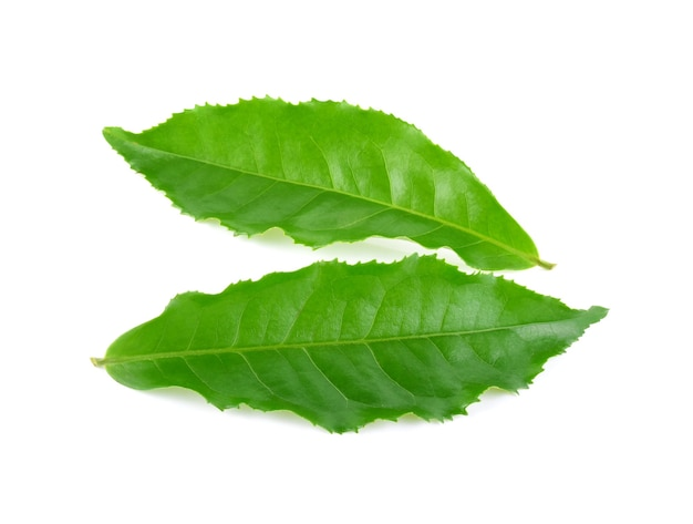 Groene theeblad geïsoleerd op witte achtergrond