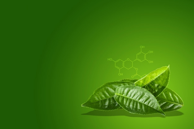 Groene theeblad met de chemische formule van egcg