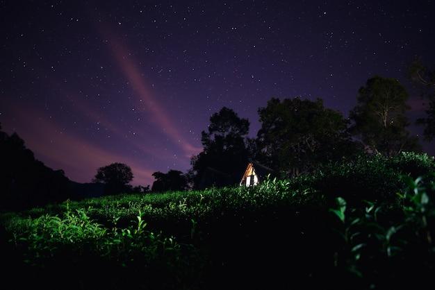 Groene theeplantage onder de sterrenhemel met houten huisje.