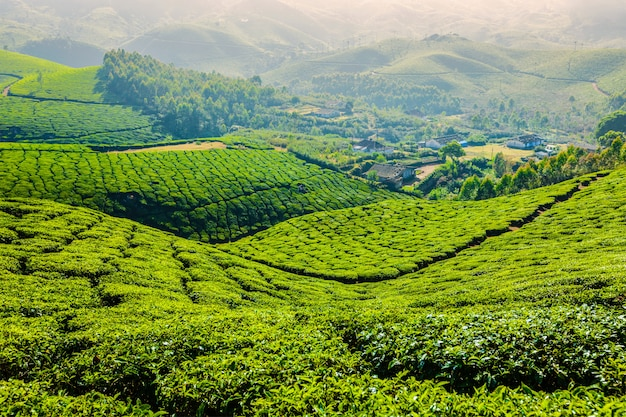 Groene theeplantages in munnar, kerala, india