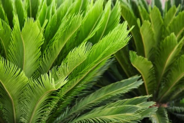 Groene tropische bladeren, close-up