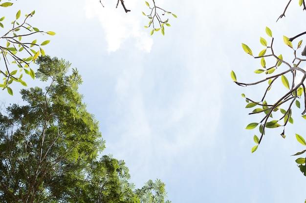 Groene tropische bladeren op de blauwe hemelachtergrond