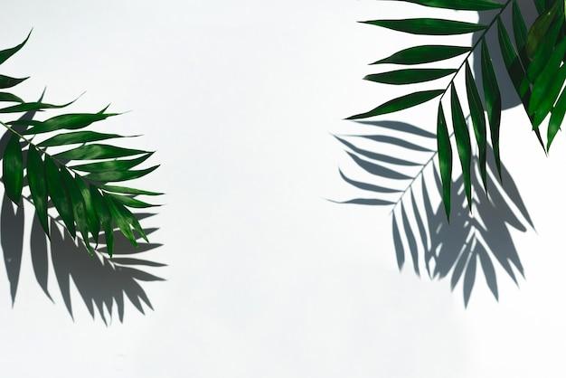 Groene tropische bladschaduw op wit