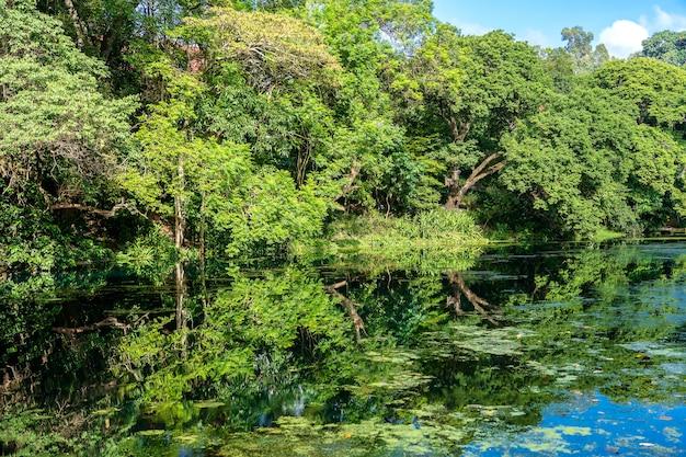 Groene tropische bomen op een meer met reflectie