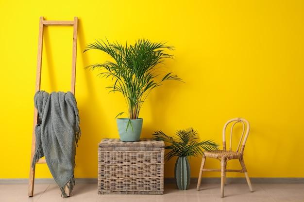 Groene tropische plant met meubilair dichtbij kleurenmuur