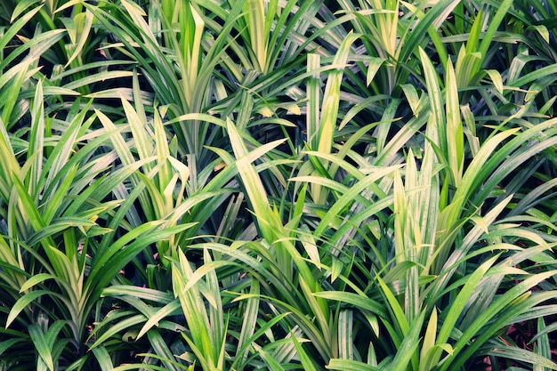 Groene van het bladpatroon textuur als achtergrond