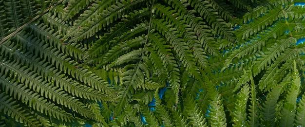 Groene varenbladeren op een blauwe waterachtergrond onder natuurlijk licht. bovenaanzicht, plat gelegd. banier.