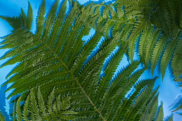 Groene varenbladeren op een blauwe waterachtergrond onder natuurlijk licht. bovenaanzicht, plat gelegd.