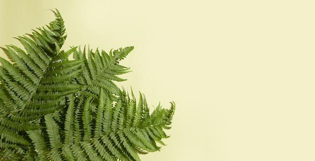 Groene varenbladeren op een lichte achtergrond. ruimte kopiëren