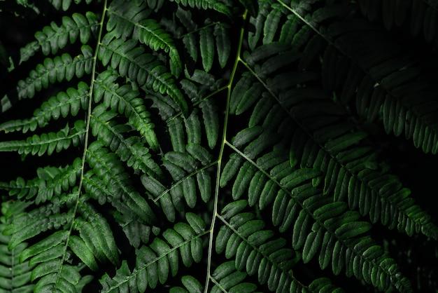 Groene varenboom die in de zomer groeit. varen met groene bladeren op natuurlijke achtergrond. natuurlijke bloemenvarenachtergrond op een zonnige dag. varen bladeren. screensaver voor een smartphone. ruimte kopiëren
