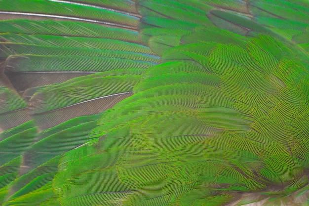 Groene veer textuur achtergrond