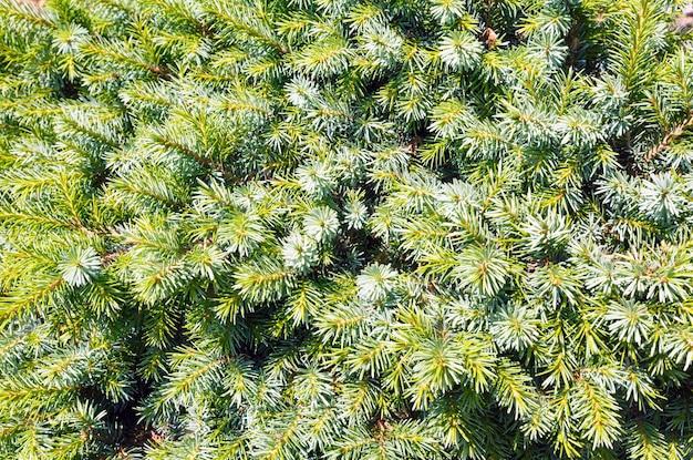 Groene vegetatieve naald