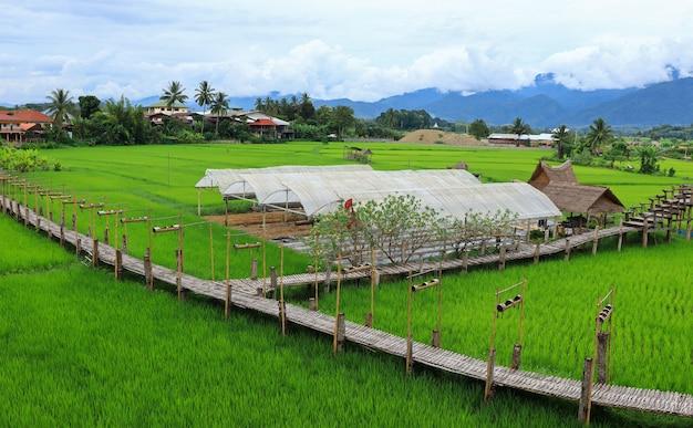 Groene velden in het regenseizoen en bamboebruggen