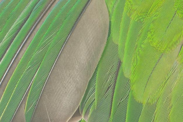 Groene veren textuur achtergrond