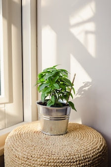 Groene verse basilicumplant in een metalen bloempot die op een krukje naast een open raam staat.