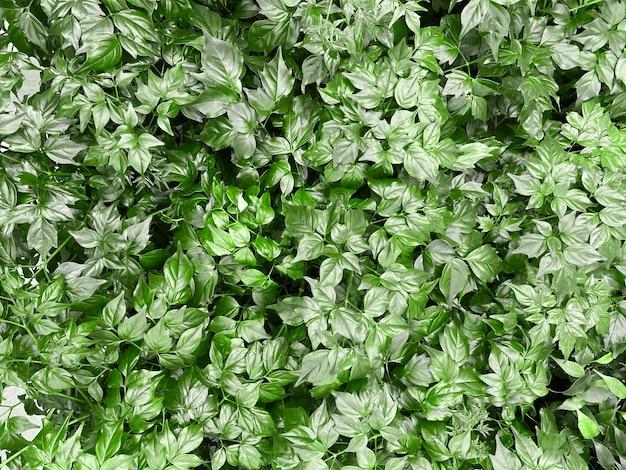 Groene verse bladeren achtergrond. perfecte textuur