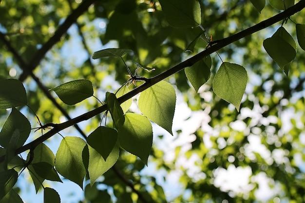 Groene verse bladeren van bomen aan een heldere blauwe lucht