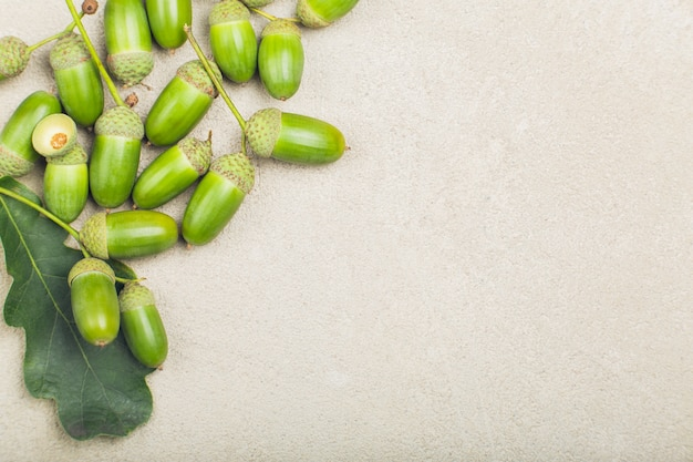 Groene verse glanzende eikels met eikenblad