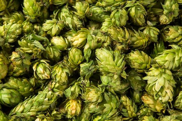 Groene verse hopbellen voor het maken van bier en brood close-up