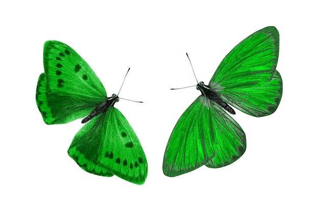 Groene vlinder. natuurlijk insect. geïsoleerd op witte achtergrond