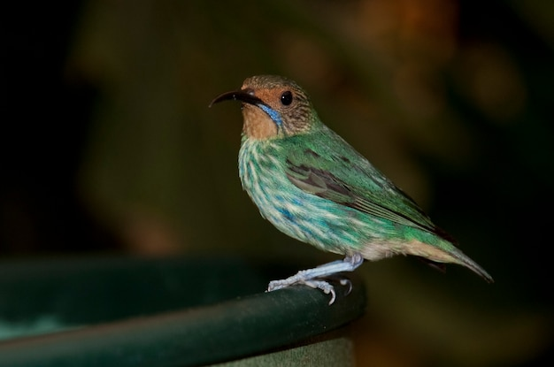 Groene vogel bij het vlinderpaleis in branson, missouri