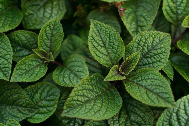 Groene weelderige bladeren achtergrondpatroon