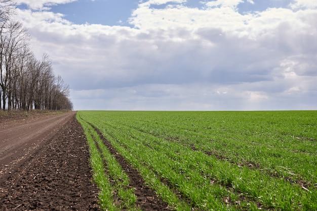 Groene weide en blauwe hemel met bos. onverharde weg op een voorgrond