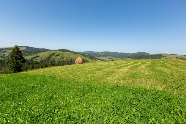 Groene weide en gemaaid gras. oogsten van hooi.