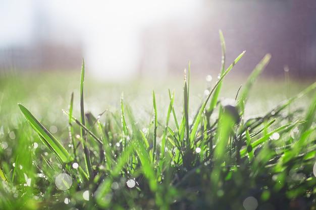 Groene weide gras gazon in de stralen van de rijzende zon
