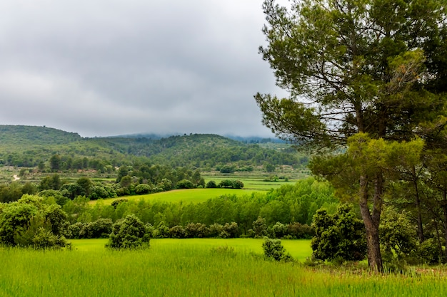 Groene weide met bergen en pijnbomen op een dag met grijze wolken.