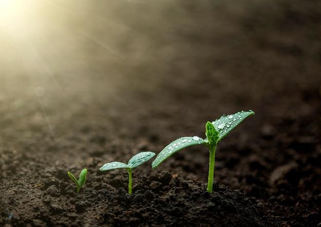 Groene zaailing groeit op de grond in de regen growing