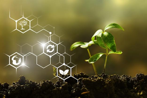 Groene zaailing groeit uit vruchtbare grond i