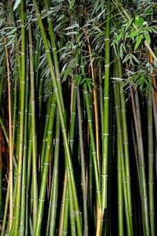 Groene zen bamboe.