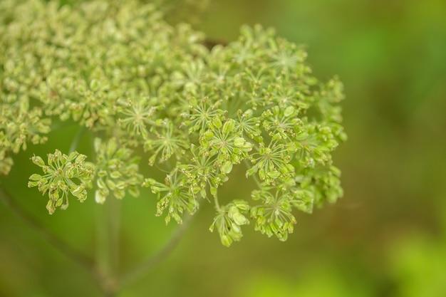 Groene zomer gebladerte abstracte textuur met bladeren en achtergrond wazig.
