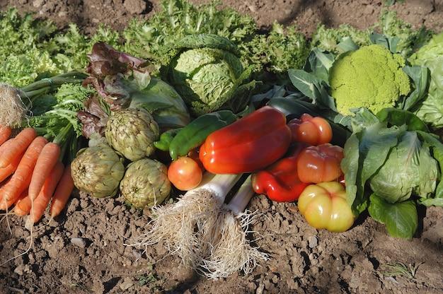 Groenten in de tuin
