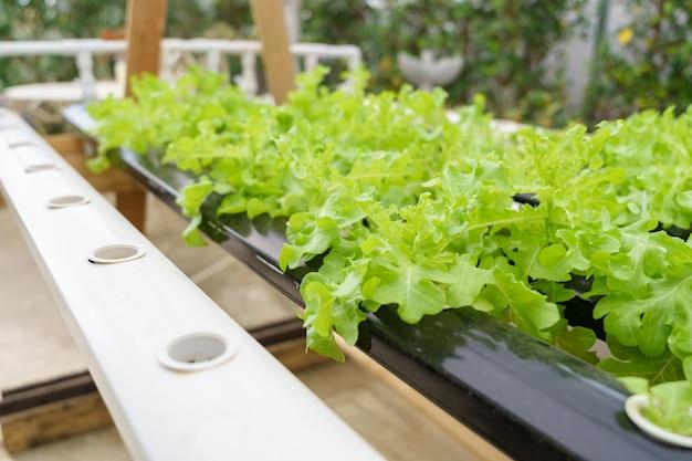 Groenten kweken zonder aarde te gebruiken of een ander type hydroponic vegetable growing te noemen