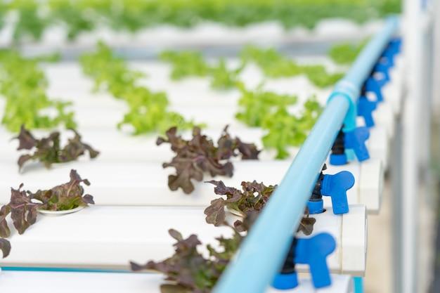 Groenten telen zonder aarde te gebruiken of een ander type hydrocultuurgroente te noemen